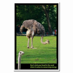 AI-PRG0011-OE1  Ostrich Energy Conservation Poster