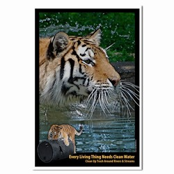 PRG0011-TW1  Tiger Clean Water Poster